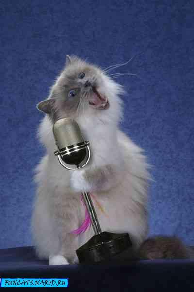 http://www.funcats.narod.ru/pc/1.jpg