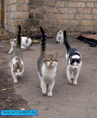 Эти смешные коты