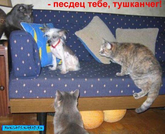Фотки котов
